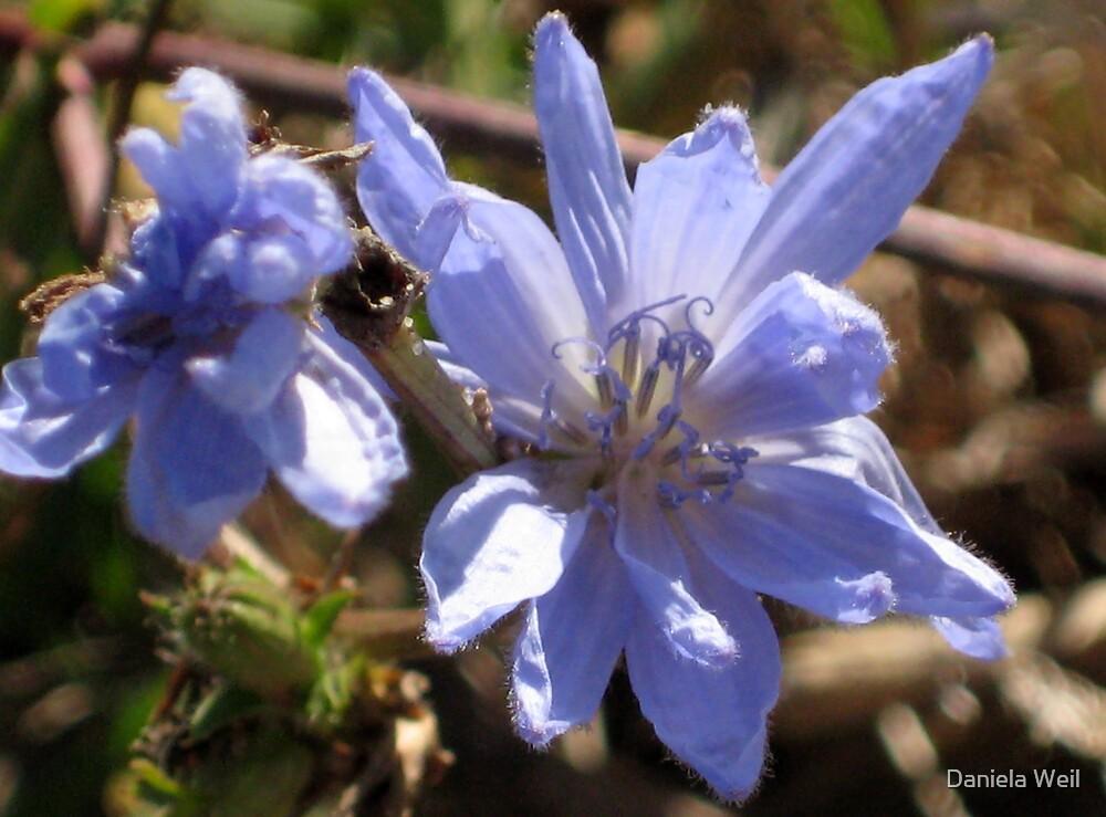 Blue Beach Flowers I by Daniela Weil