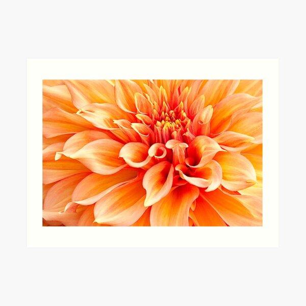 Dahlia in Orange Art Print