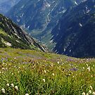 Summer Wildflowers and Mountains by lkamansky