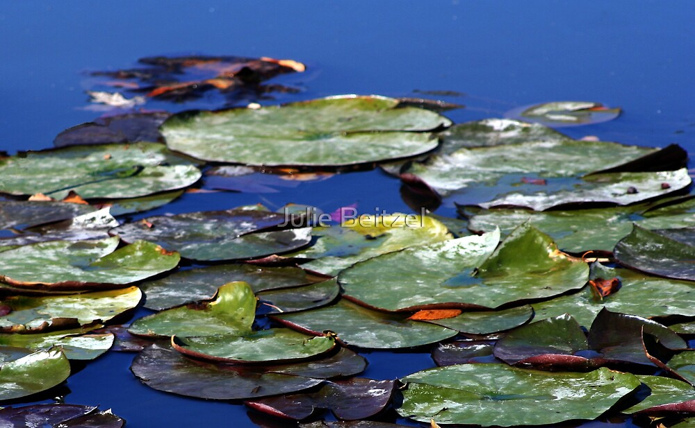 Lilly Pads by Julie Beitzel