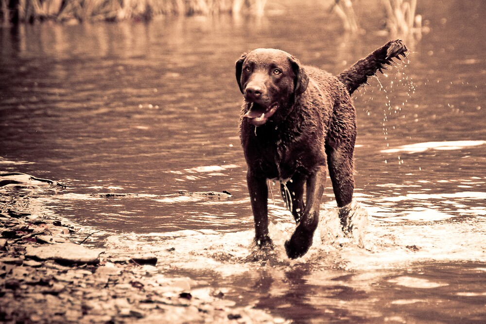 Dog in Water by Bob McNicoll