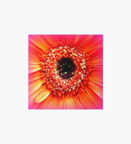 Gerbera in orange and pink Art Board
