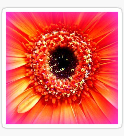 Gerbera in orange and pink Sticker