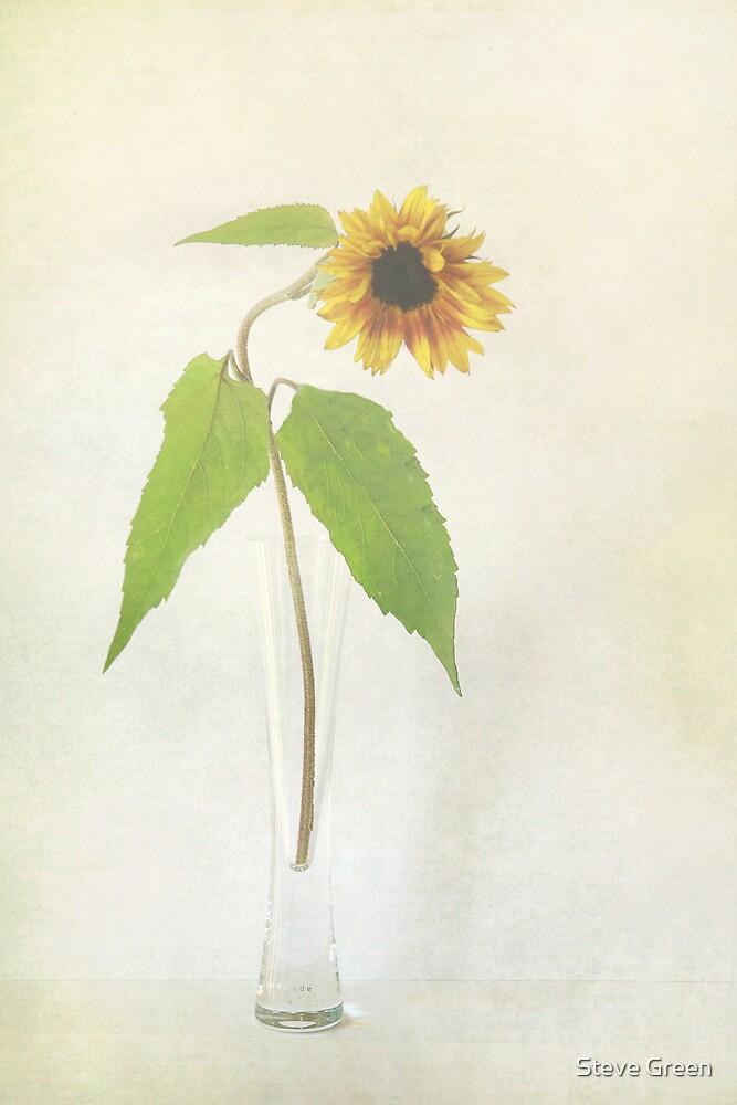 Sunflower by Steve Green