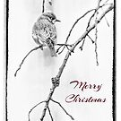 Christmas Greeting Bluebird in Black and White by MotherNature