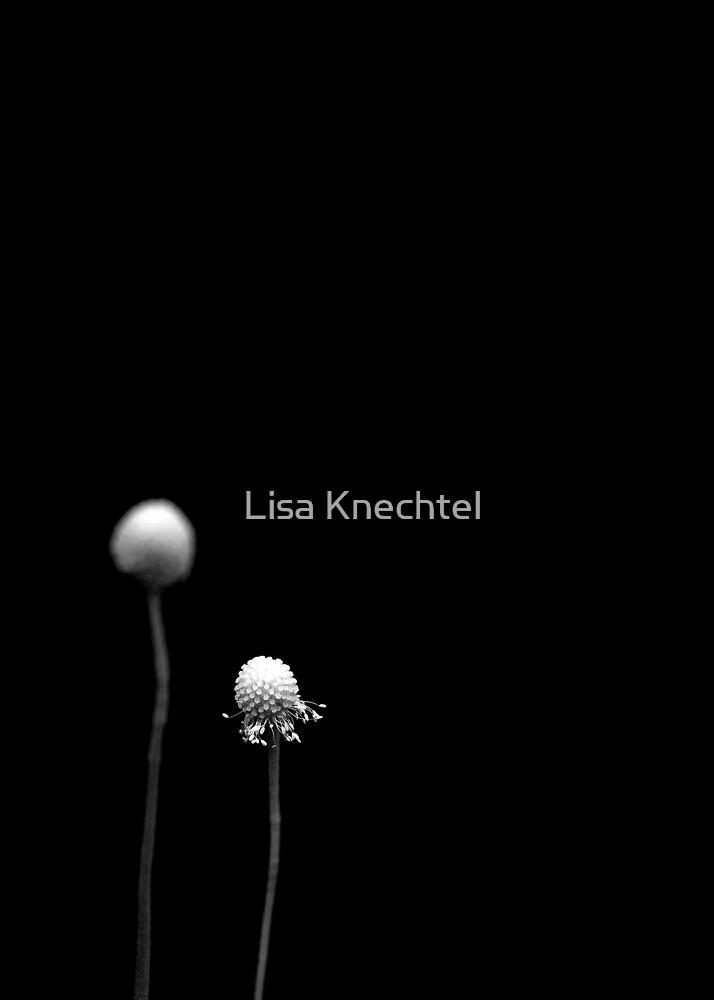 Simplicity by Lisa Knechtel