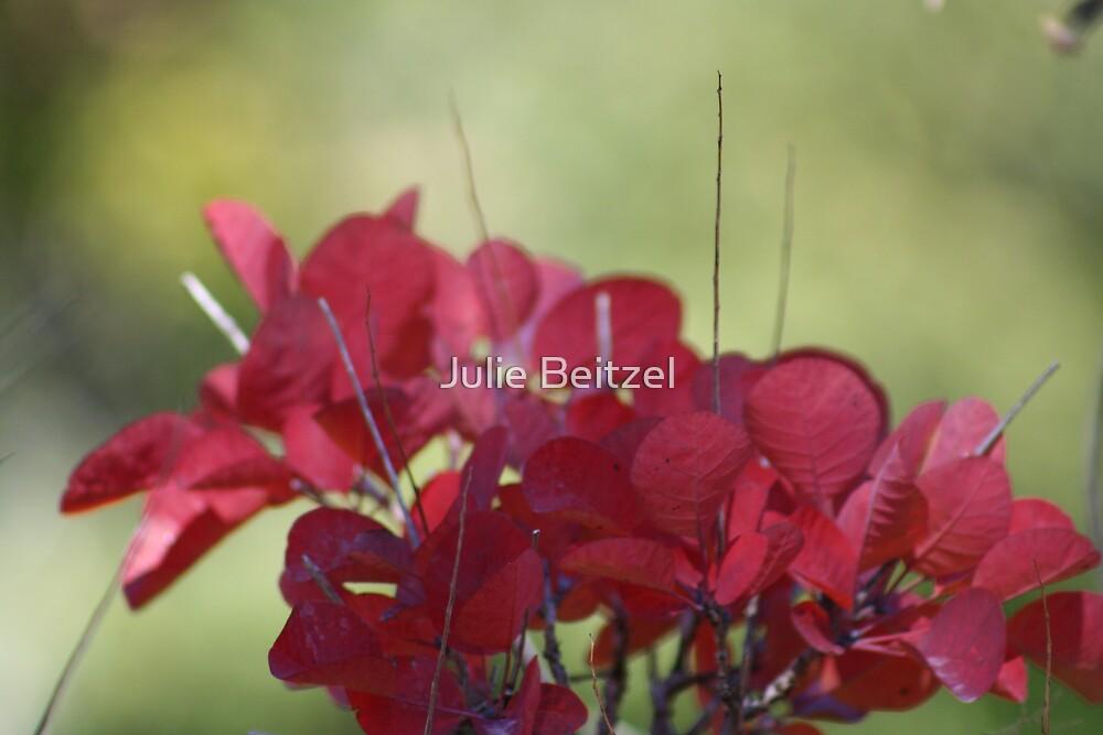 Red Leaves by Julie Beitzel