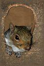 Wazzzup   (Grey Squirrel) by Foxfire