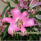 Christmas greetings! by Ana Belaj