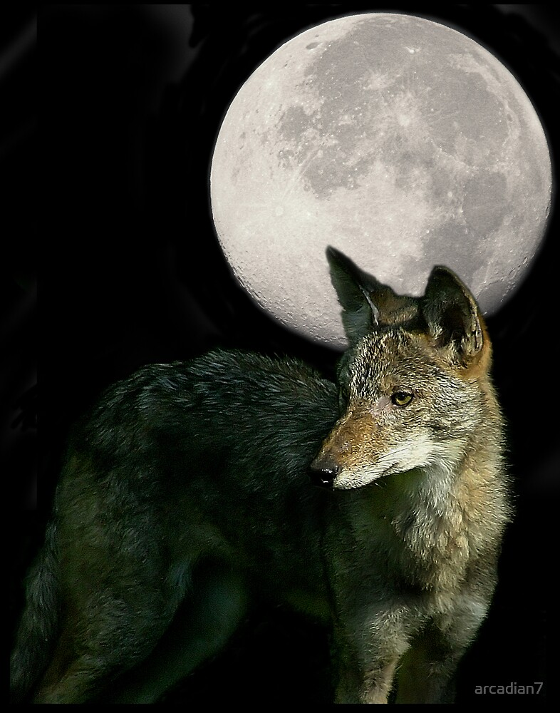 Coyote Moon by arcadian7