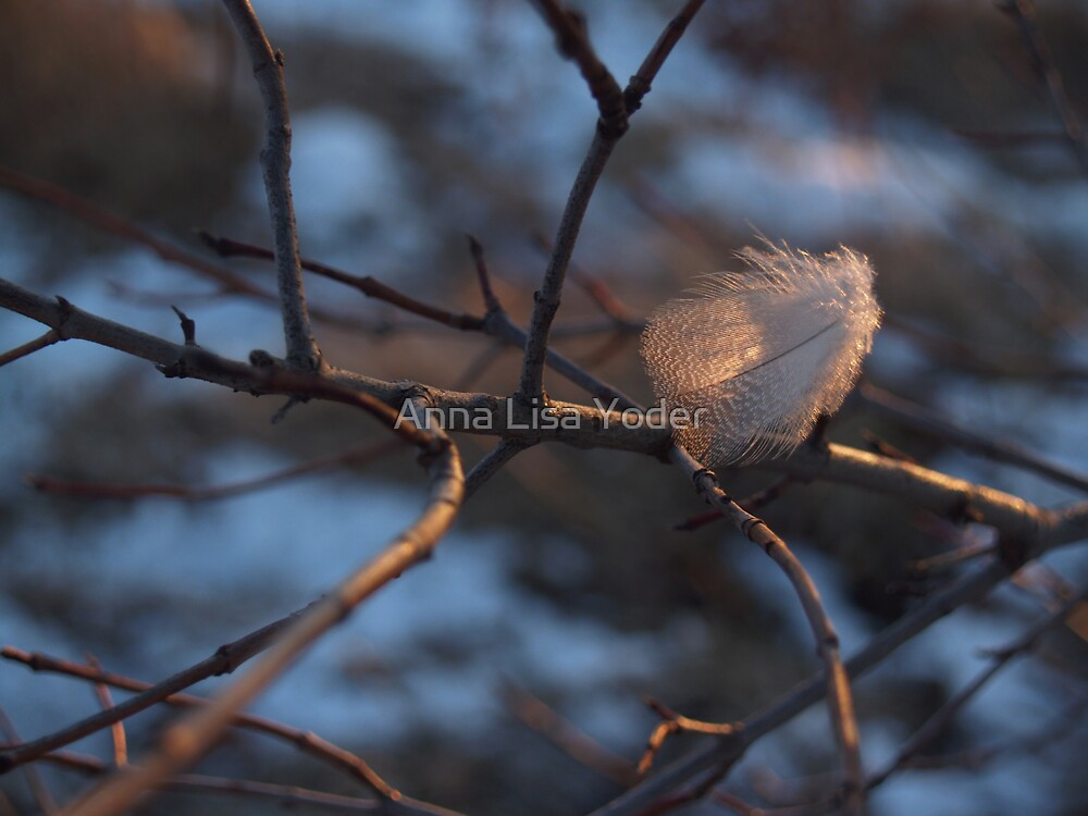 Downy Feather Back-lit on Branch by Anna Lisa Yoder