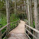 Walk with Nature by Rosalie Scanlon