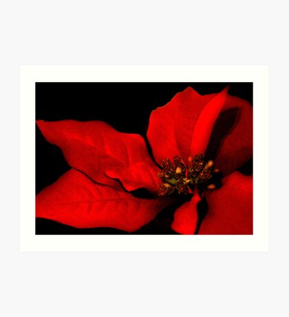 Poinsettia Passion Art Print