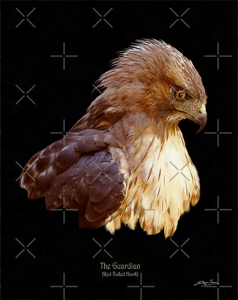 """""""The Guardian"""" (Red-Tailed Hawk) by Skye Ryan-Evans"""