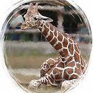 Baby Giraffe from the Madison Zoo by Nanagahma