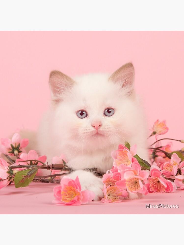 Rosa Niedlichkeit von MirasPictures