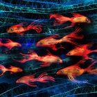 fishy fishy fishy fish by Matt Mawson