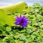 Tropical Purple Flower by Cynthia48