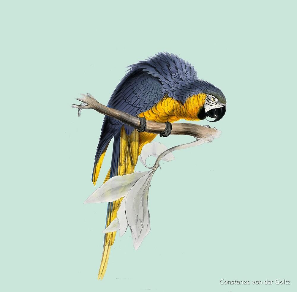 Papagei - illustration by Edward Lear von Constanze von der Goltz