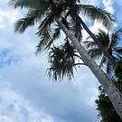 Palm at Fitzroy by Annie Smit