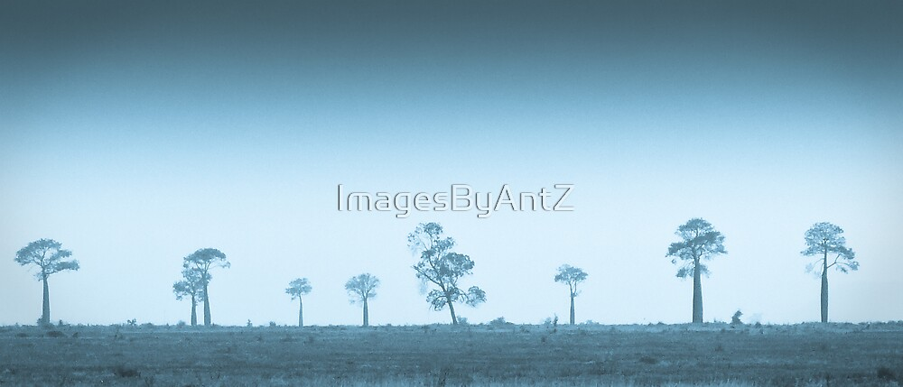 Bottle Trees by ImagesByAntZ