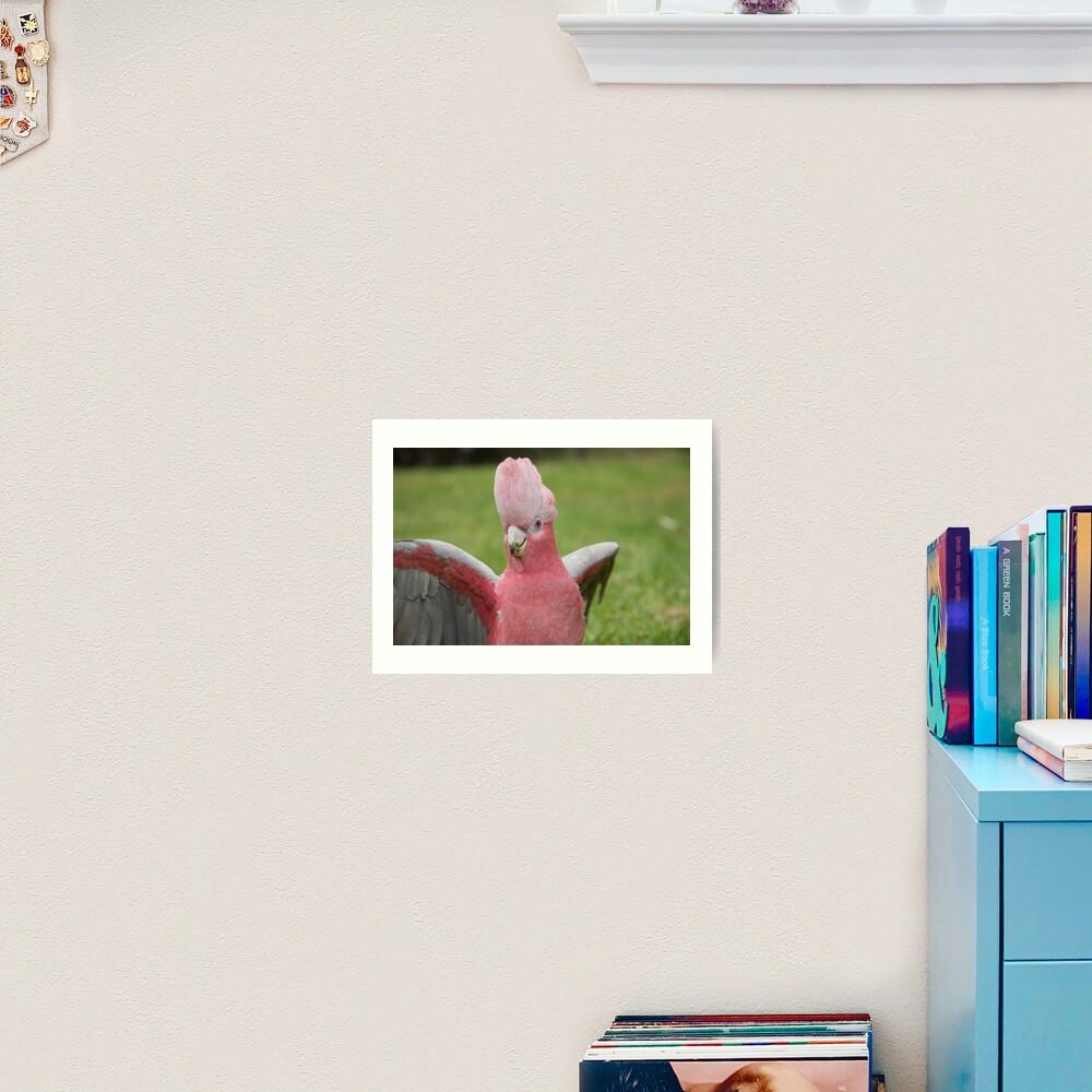 Galah showing off Art Print