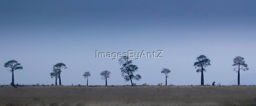 Line of Bottle Trees by ImagesByAntZ