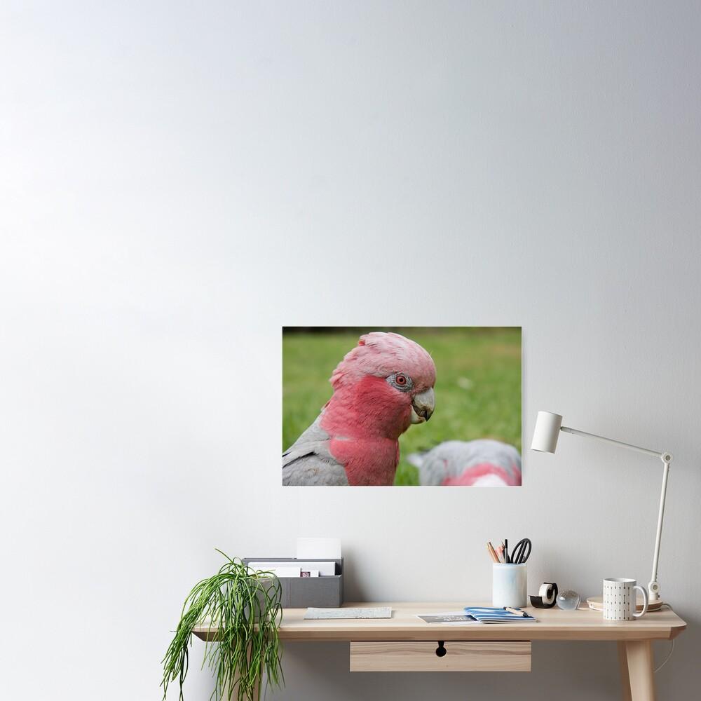 Pink & Grey Galah Poster