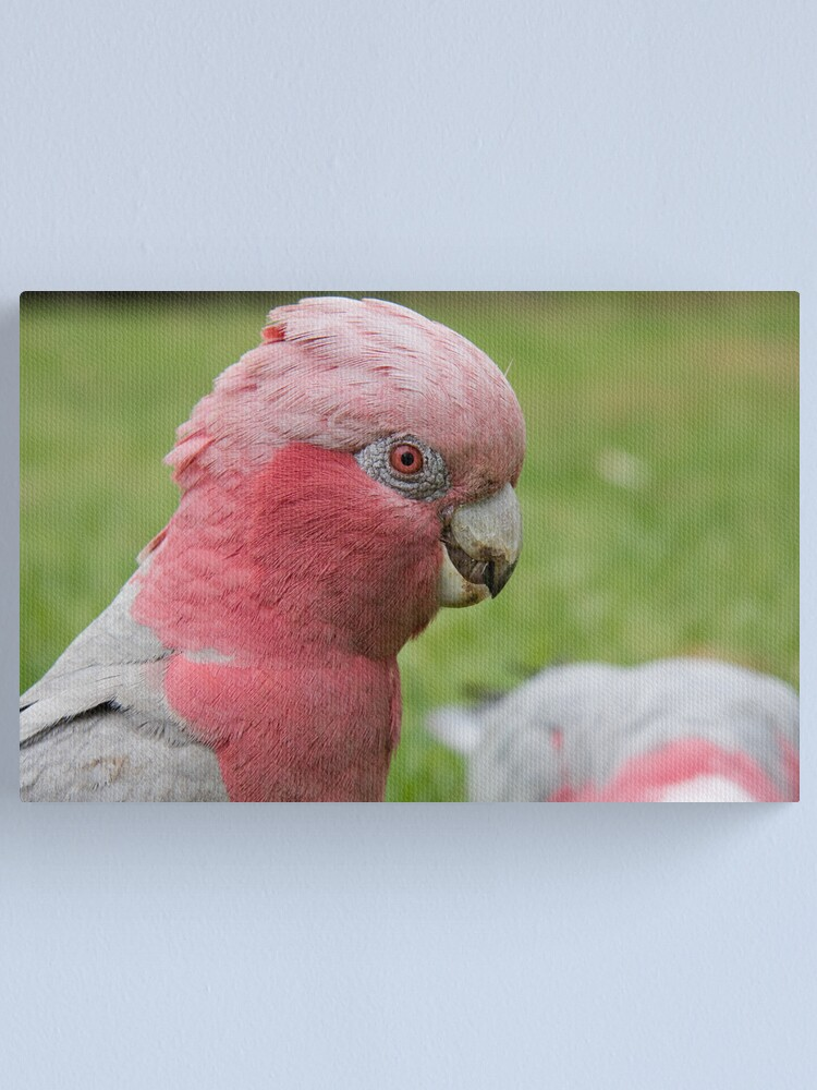 Alternate view of Pink & Grey Galah Canvas Print