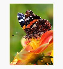 ADMIRAL Photographic Print
