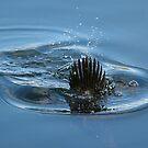 Musk diver by Trevor Needham