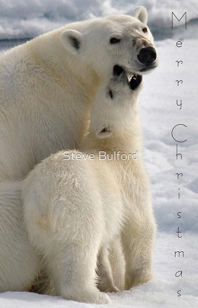 Polar Love - Christmas Card by Steve Bulford