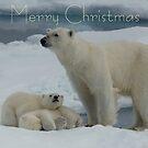 Hey Mum! - Christmas Card by Steve Bulford