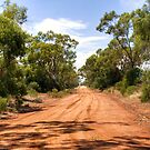 Summer Light Along Mowabla Road, Condobolin, NSW by Christine Smith