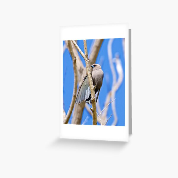 SWALLOW ~ Dusky Woodswallow by David Irwin ~ WO Greeting Card