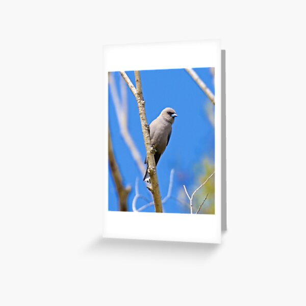 SWALLOW ~ Dusky Woodswallow 5LFFKUDJ by David Irwin Greeting Card