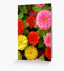 Zinnias Greeting Card