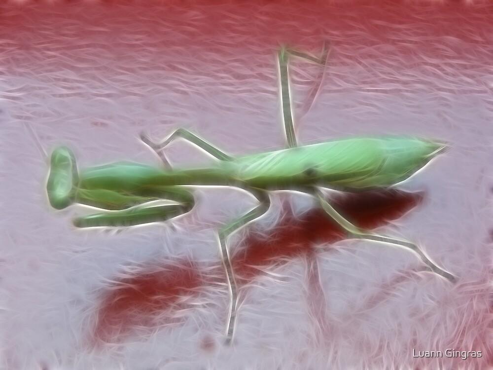 Mantis by Luann Gingras