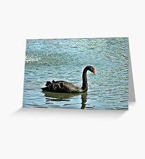 Black Swan Greeting Card