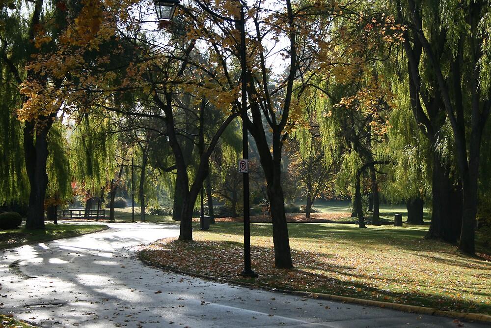 Polson Park by SpringLupin