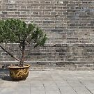 Tree in China by Gillian Anderson LAPS, AFIAP