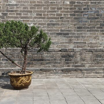 Tree in China by Scully