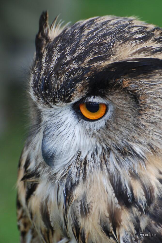 Eagel owl profile by ©FoxfireGallery / FloorOne Photography