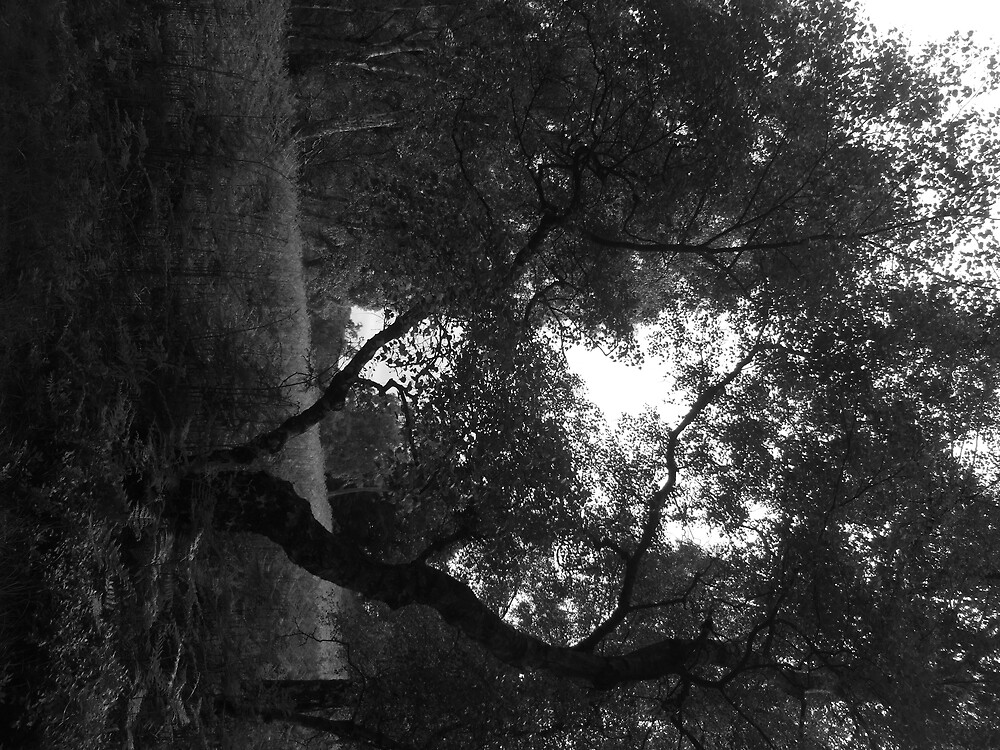 tree, black and white by Felicity Ward