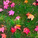 Autumn Splendor in the Grass  by Bonnie M. Follett
