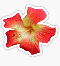 Gorgeous Red And Gold Hawaiian Hibiscus Flower No Text Sticker