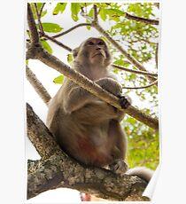 Monkey Island Poster