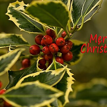 Merry Christmas! Holly and Berries by jacqi