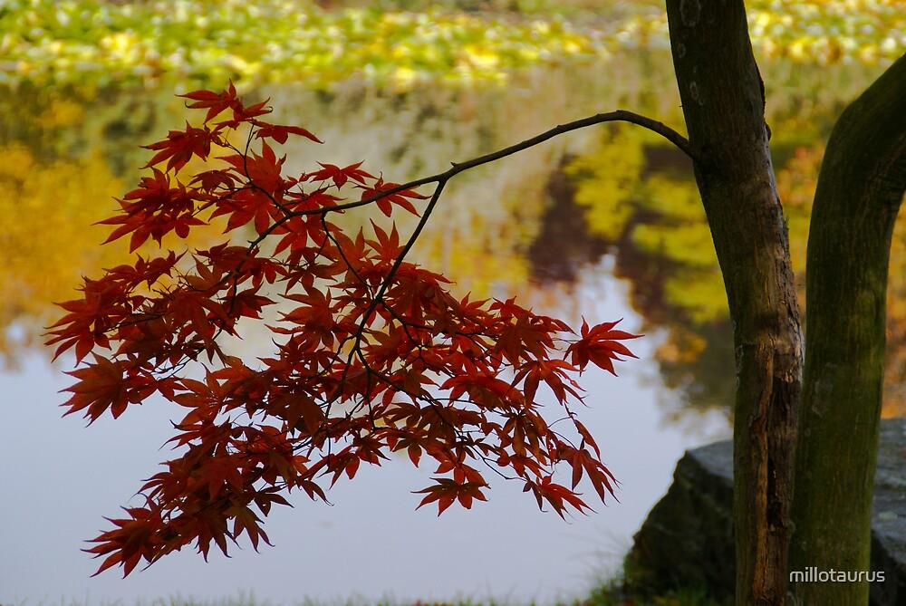 Autumn in Lodz's Botanic Garden 006 by millotaurus
