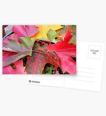 Autumn 4 Postcards